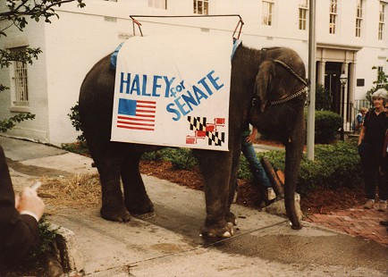 Elephant in George Haley's campaign for US Senator from Maryland © Pryor Center for Arkansas Oral and Visual History, University of Arkansas