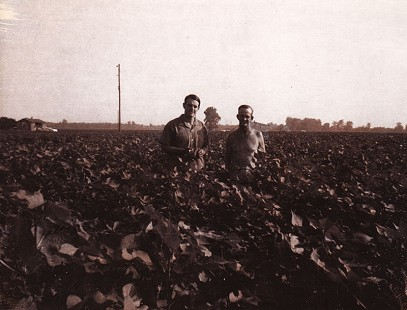 Stanley Reed with his father, Eldon Reed, standing in a cotton field, Marianna, Arkansas © Pryor Center for Arkansas Oral and Visual History, University of Arkansas